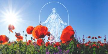 Image of The Church's new symbol. Photo of poppy field by corina ardeleanu via Unsplash.